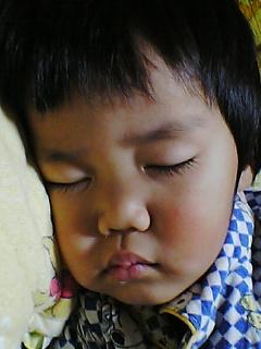 はやては寝ました(-.-)zzZ