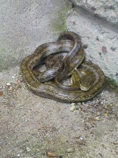 蛇さんが遊びに来たよ