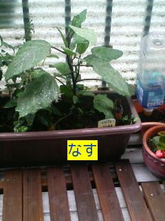 ベランダで家庭菜園